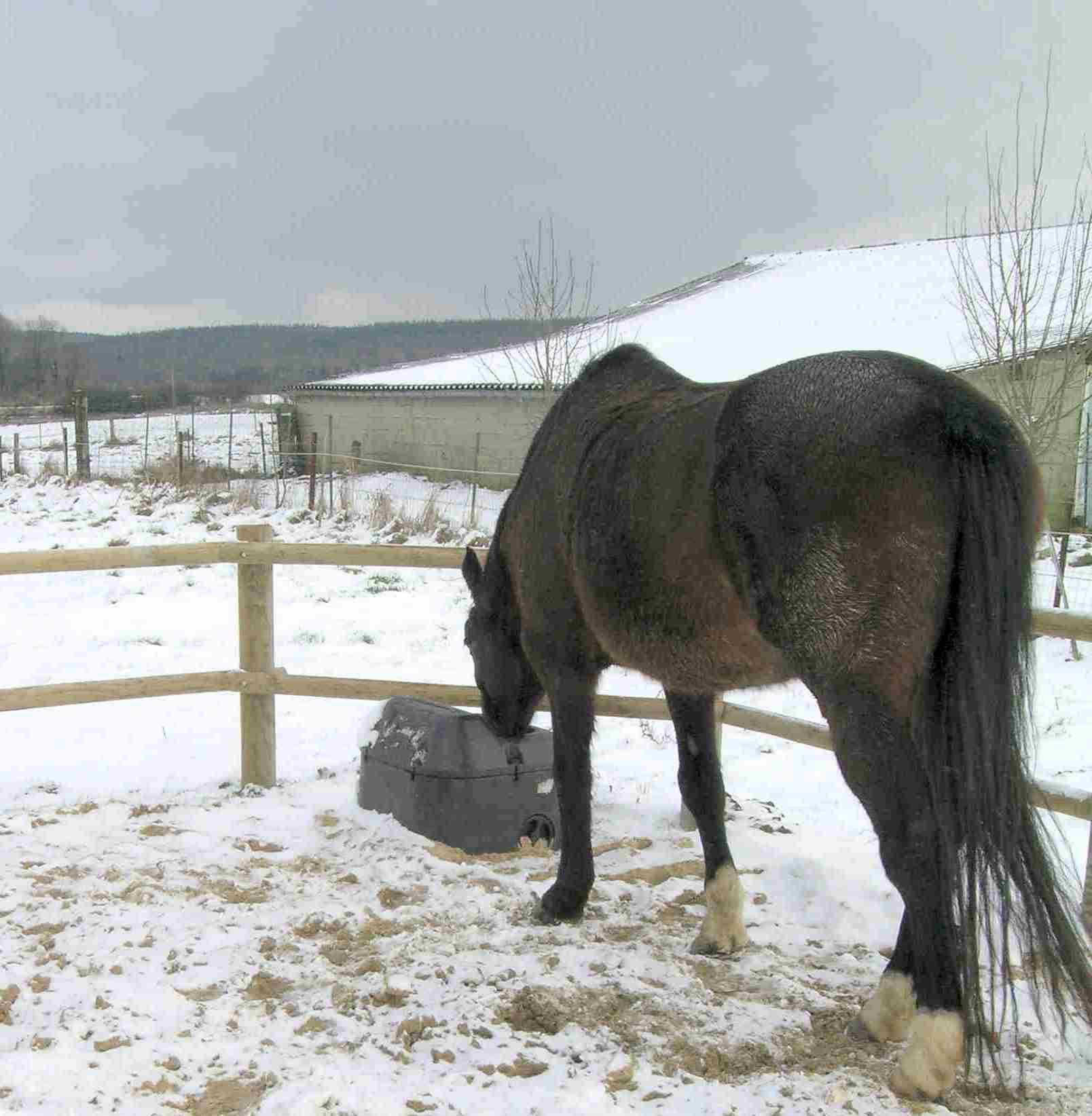 Abreuvoir antigel isotherme THERMOLAC pour chevaux
